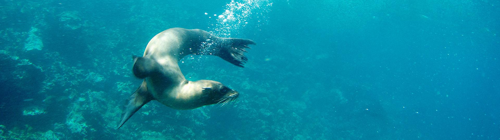 Aquarium of Honolulu, Hawaii Hotel